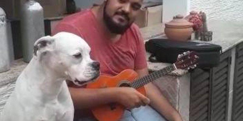 Cachorro que adora cantar um pagodinho, marque os amigos pagodeiros!