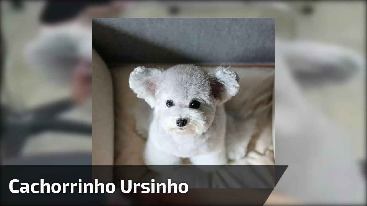 cachorrinho mais fofinho que você vai ver hoje olha só a carinha