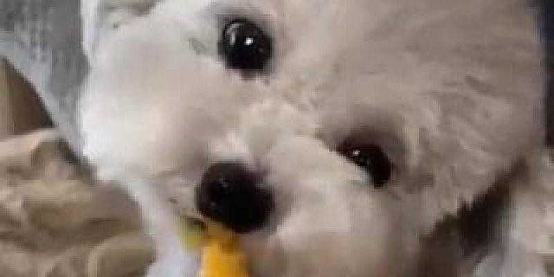 Cachorrinhos saboreando suquinho, é um mais fofinho que o outro!!!