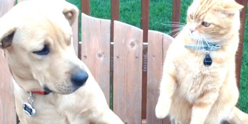 Cães e gatos, uma mistura de amizade e brigas, olha só esta galerinha aprontando