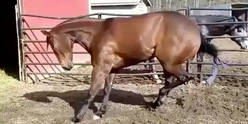 Cavalos dando pulos de alegria, o que será que o deixou feliz assim?