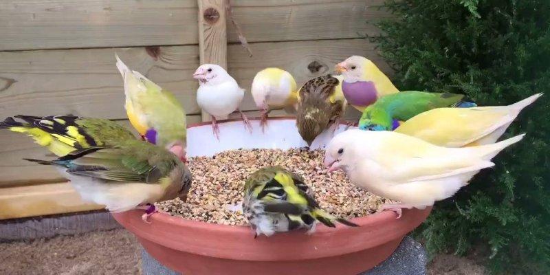 Comedouro para pássaros, que tal fazer uma dessas em sua casa?