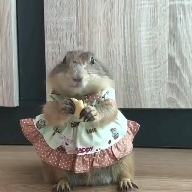Roedora com vestidinho comendo seu biscoito, que estilosa! 3e1880da01
