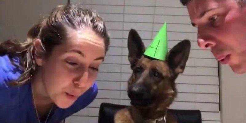 Vídeo com cachorro fazendo aniversário, olha só a carinha dele!!!