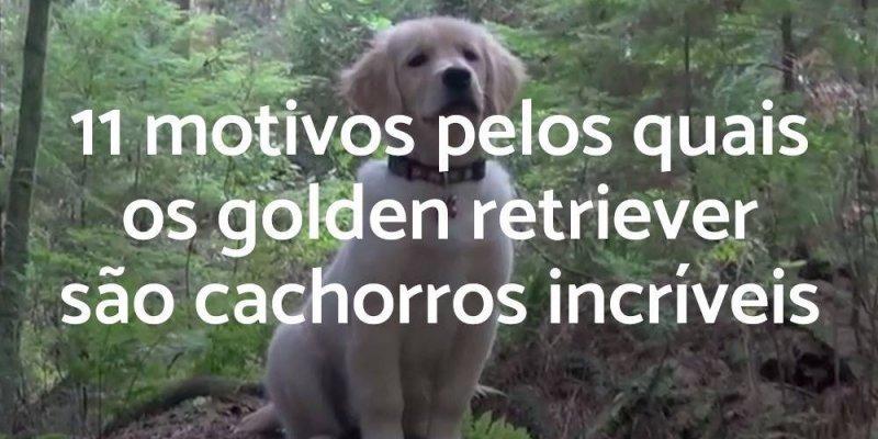 Vídeo mostrando porque os cães da raça Golden Retriever são ótimos animais!!!