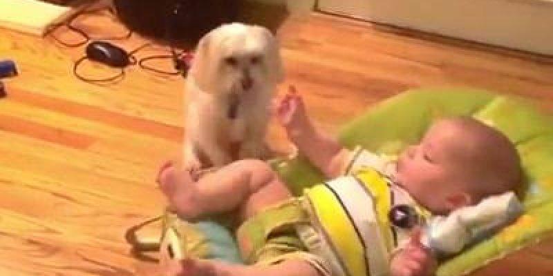 Cachorros e bebês, um video que não tem como não amar, confira!