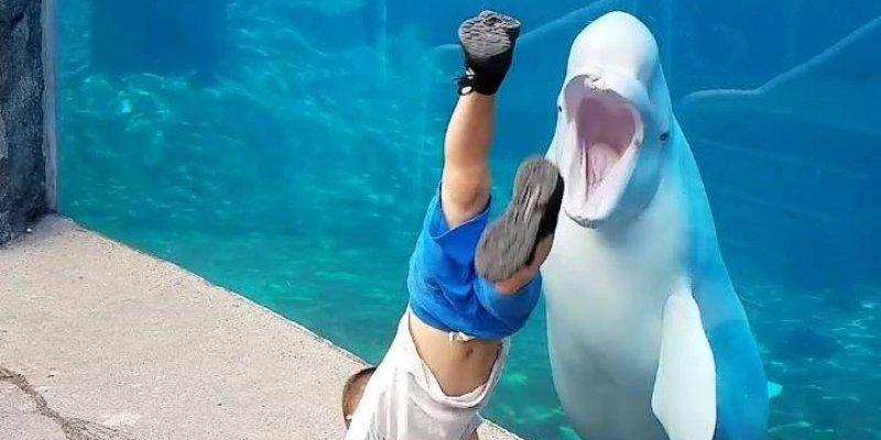 Crianças Se Divertindo No Parque: Crianças Se Divertindo Com Animais Aquáticos, Que Divertido