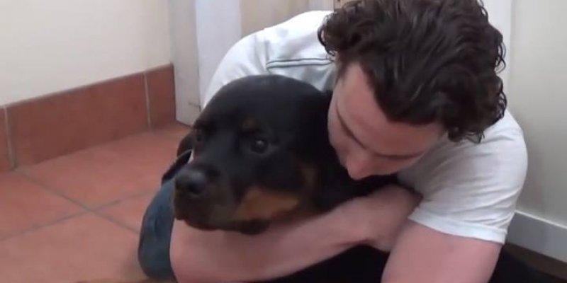 5 Coisas que você faz com seu cão que pode não fazer bem para ele!