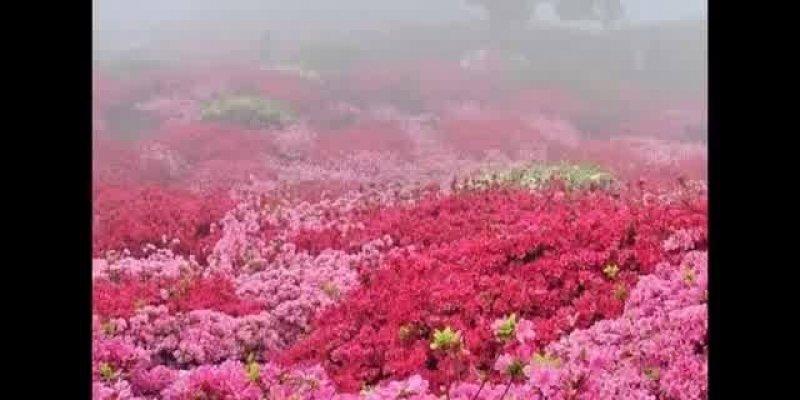 Vídeo com fotos das mais belas flores, vale a pena cada segundo de vídeo!!!