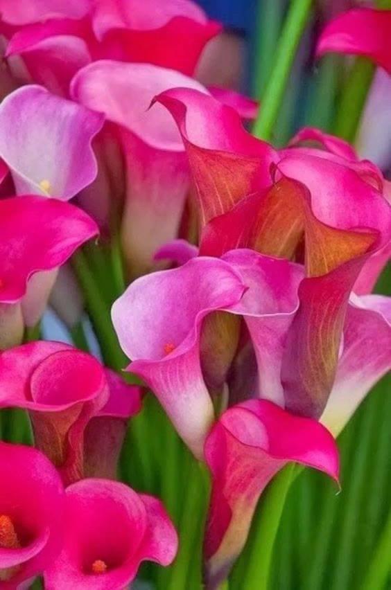 Vídeo Com Lindas Flores Rosas Cada Uma Com Sua Beleza E Forma Unica