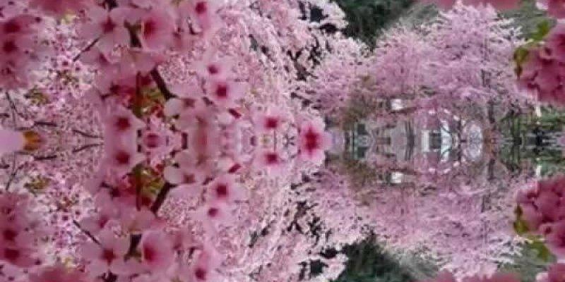 Vídeo com lindas fotos de flores de nossa magnifica natureza, aprecie!!!