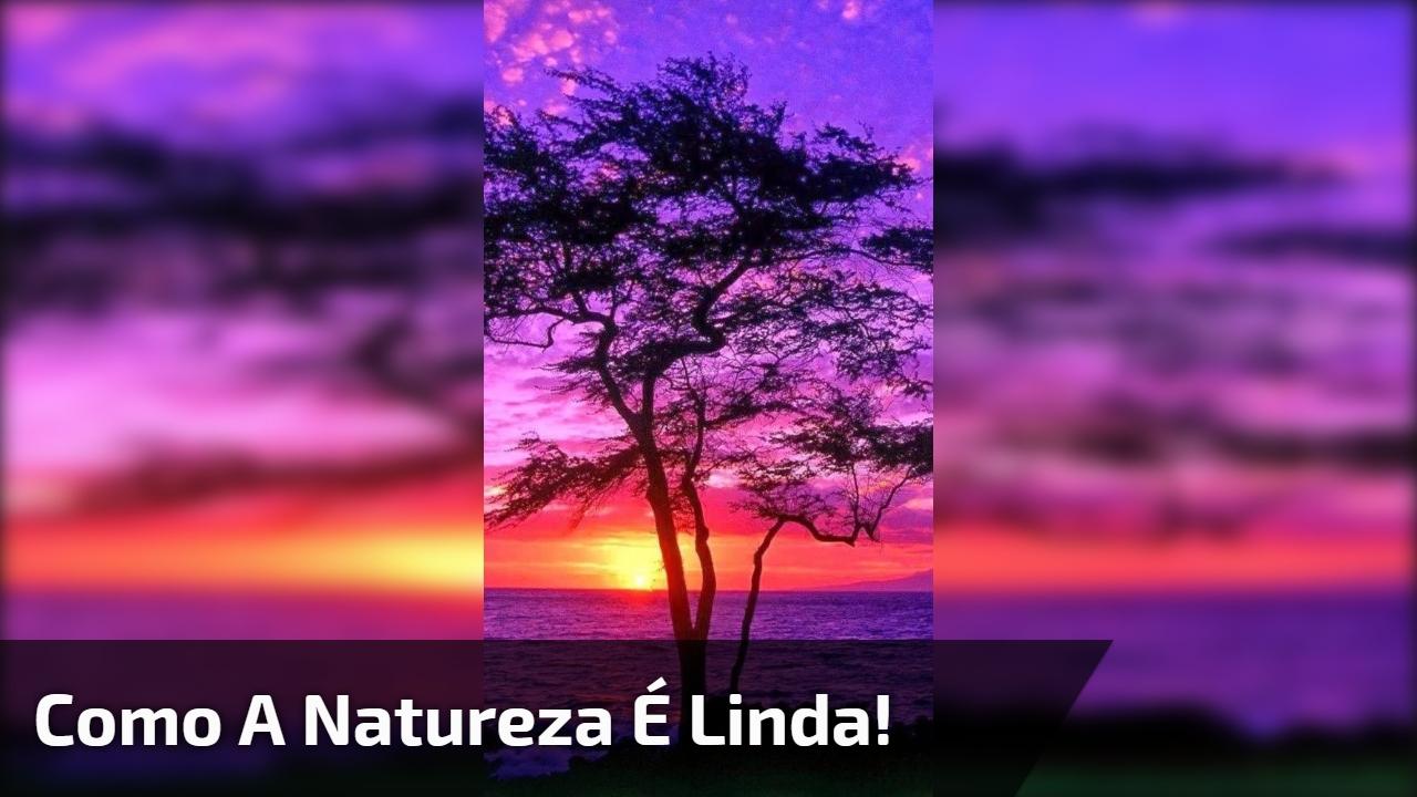 Vídeo Com Lindas Imagens Do Por Do Sol Como A Natureza é Linda