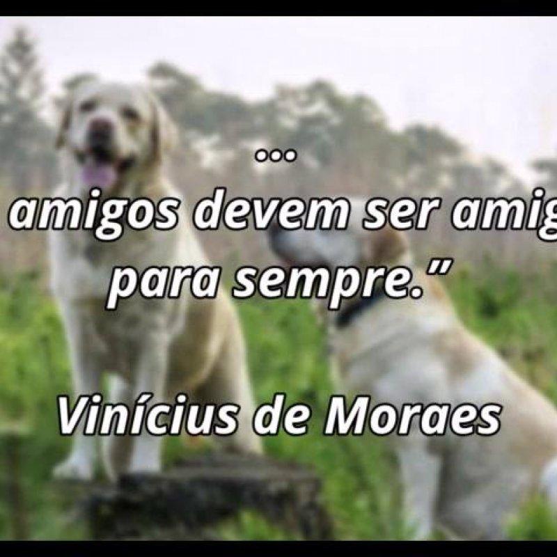 Frase De Amizade De Vinícius De Moraes Compartilhe No Facebook