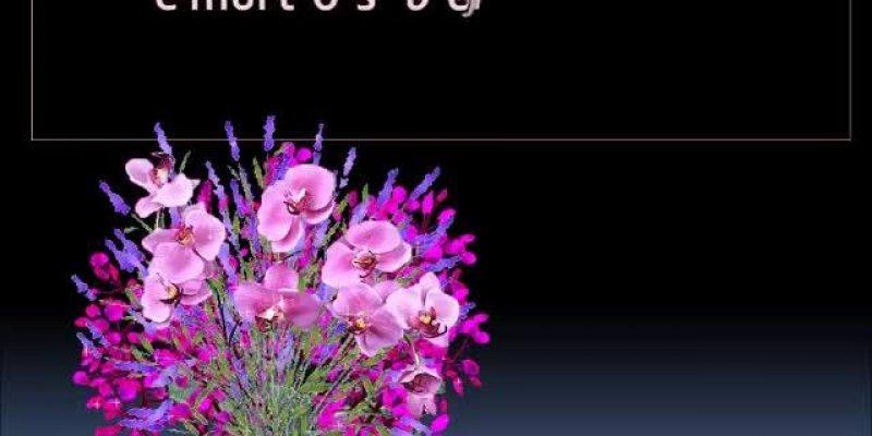 Mensagem De Boa Tarde Para Enviar Através Do Whatsapp: Vídeo Com Flores E Mensagem De Carinho Para Desejar Boa