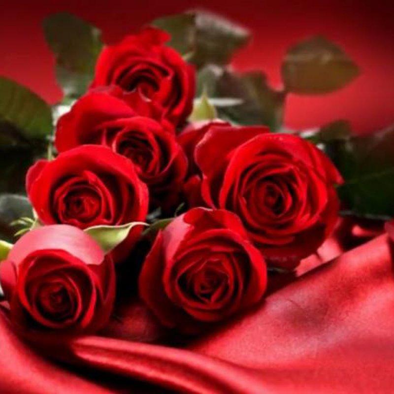 Linda História De Amor Rosas Vermelhas Narrada Por Voz Masculina