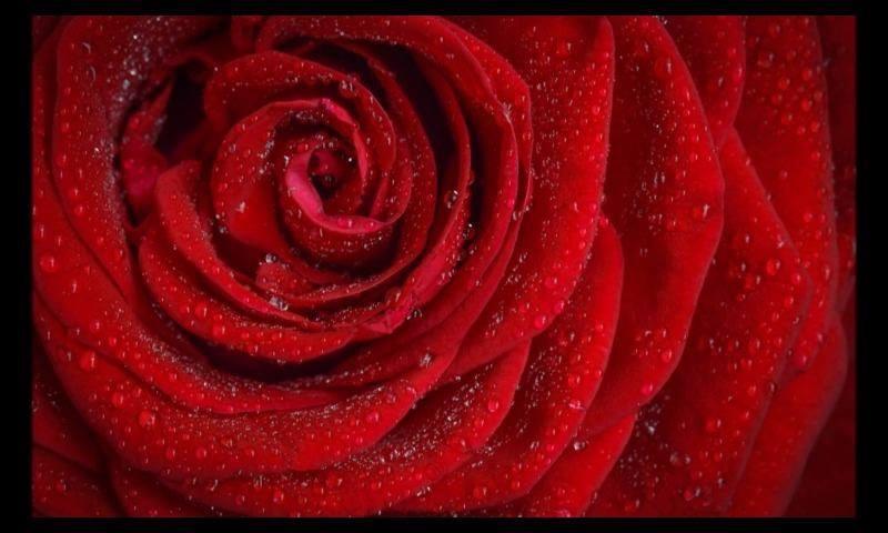 Eu Amo Você Muito Do Tamanho Do Universo: Mensagem De Amor Para Alguém Muito Especial, Eu Te Amo E