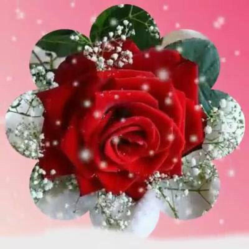 Mensagem De Amor Para Namorada Meu Amor Receba Essas Lindas Flores