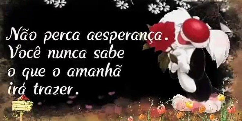 Muitas vezes Boa Noite e Bom Sonhos com Gatinho Frajola, envie pelo Whatsapp! LU06