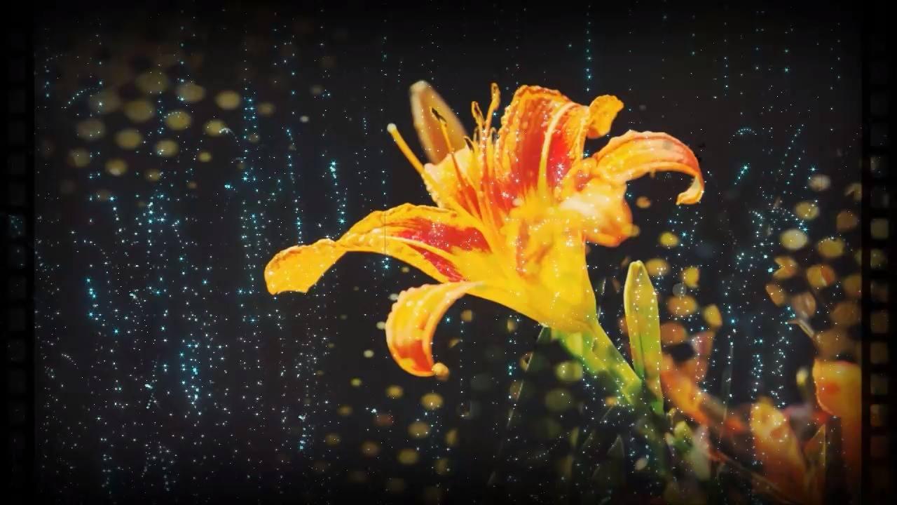 Mensagem Boa Noite Romântica Com Flores Para Você Enviar