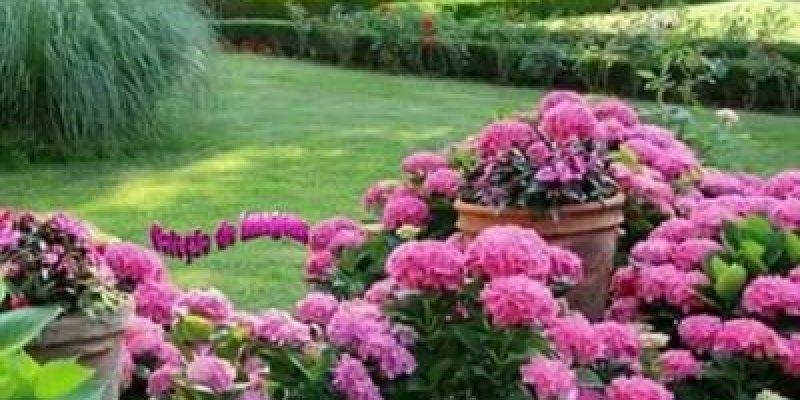 Flores E Frases Boa Noite: Vídeo De Boa Noite Com Flores E Música Se Eu Tiver Que