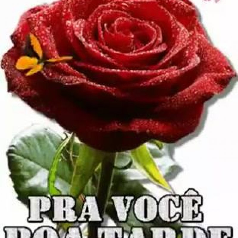 Mensagem Boa Noite Com Rosas Frases E Mensagens Em Imagens