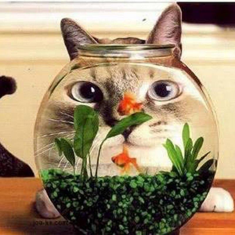 Mensagem De Boa Tarde Com Gatos Compartilhe Esta Fofura No Facebook