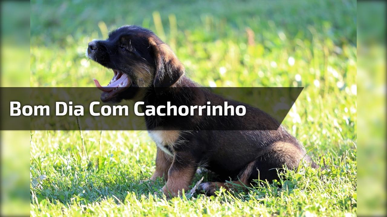 Bom Dia Com Cachorrinho Abrindo A Boca De Sono Compartilhe No Facebook
