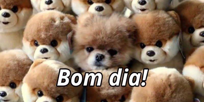 Imagens De Bom Dia Para Whatsapp: Bom Dia Para Amigo Do Whatsapp, Com Lindos E Fofinhos Animais