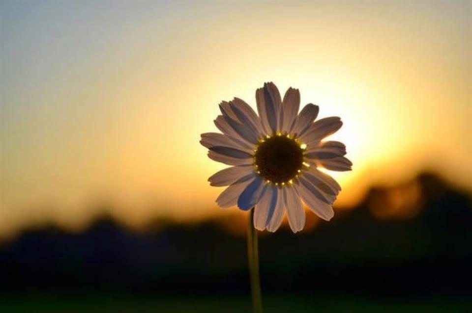 Bom Dia Quarta Feira Faça Da Vida O Seu Doce Predileto E Seja Feliz