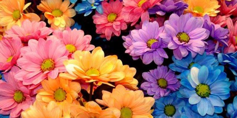 Mensagem De Bom Dia Com Flores, Compartilhe Com As Amigas