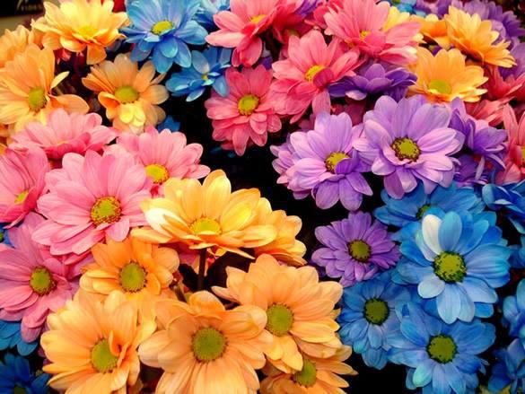 Vídeo De Bom Dia Com Lindas Flores De Fundo Para Enviar: Mensagem De Bom Dia Com Flores, Compartilhe Com As Amigas