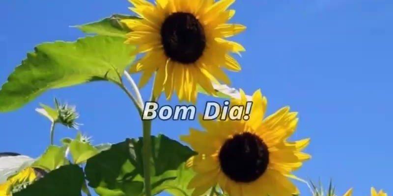Mensagens De Bom Dia Flores: Mensagem De Bom Dia Com Flores, O Desejo Atrai E A Fé Realiza
