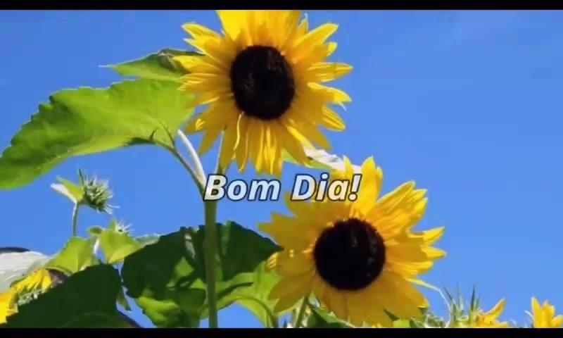 Mensagem De Bom Dia Com Flores O Desejo Atrai E A Fé Realiza