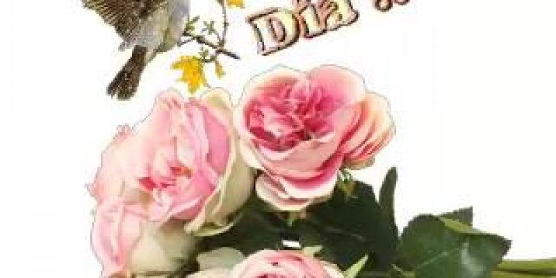 Vídeo De Bom Dia Com Lindas Flores De Fundo Para Enviar: Mensagem De Bom Dia Com Rosas E Passarinhos, Perfeito Para