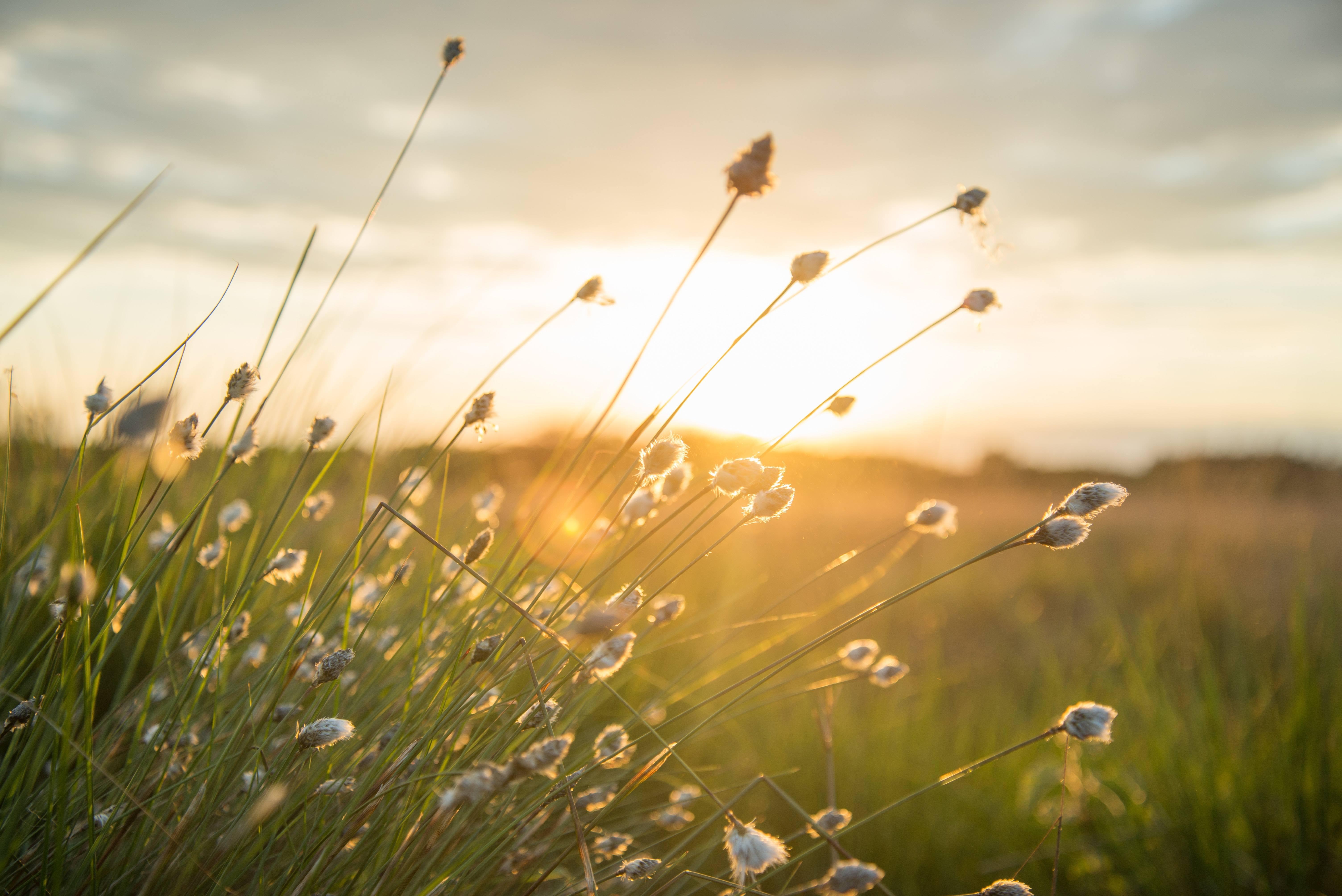 Bom Dia Iluminado E Abençoado Por Deus: Mensagem De Bom Dia E Boa Semana! Que Sua Semana Seja