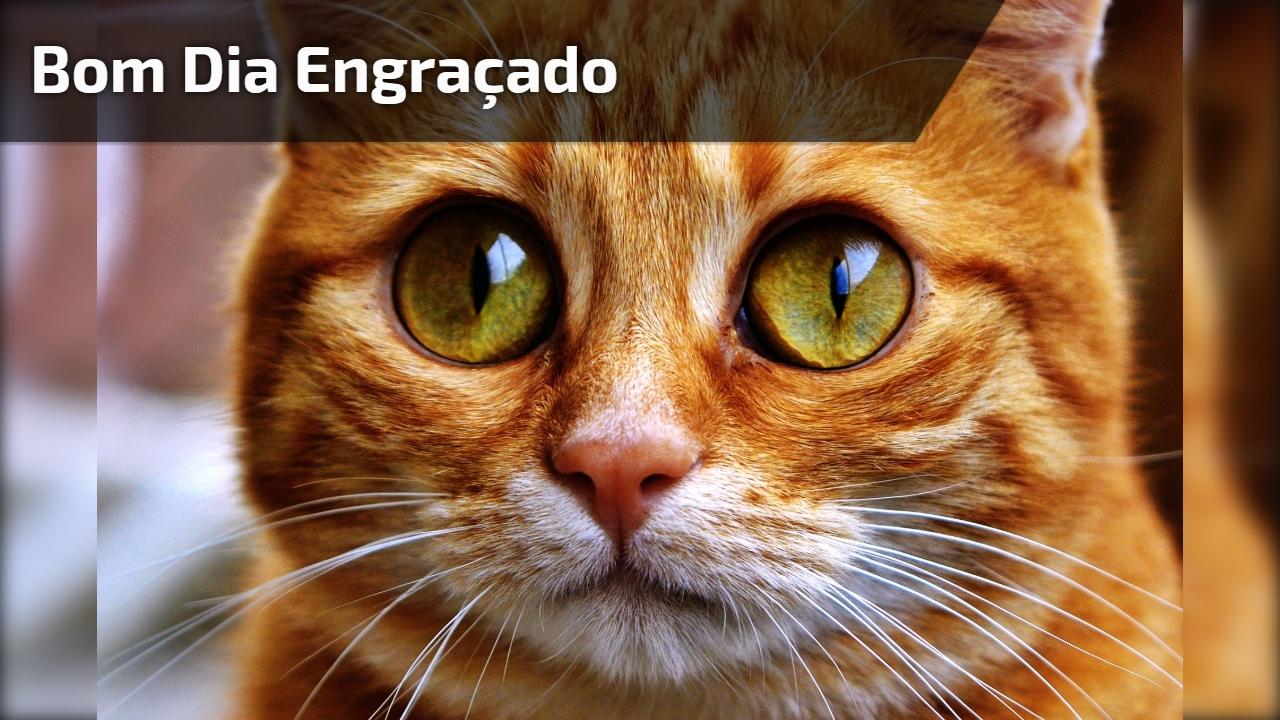 Bom Dia Engracado: Mensagem De Bom Dia Engraçada Para Grupos Do Whatsapp