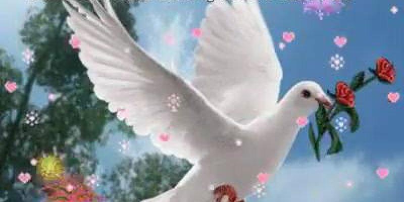 Mensagem De Bom Dia Para Amigos Que As Bençãos De Deus Nos Alcance