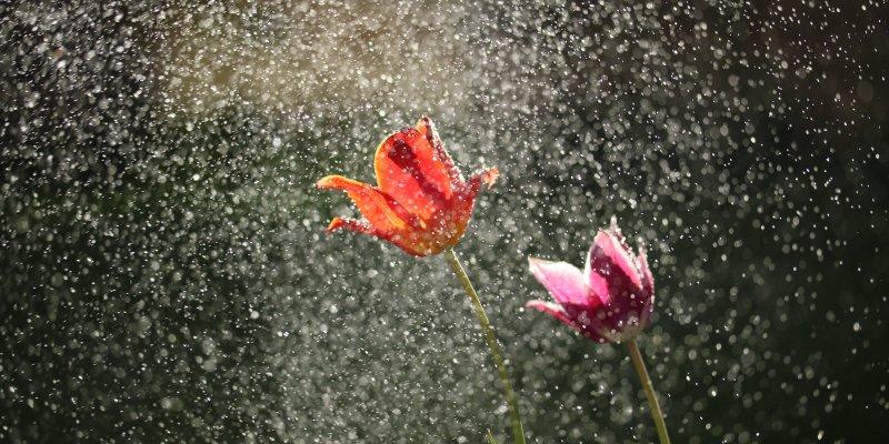 Mensagem De Bom Dia Para Sexta-feira Com Chuva, Todo Dia é