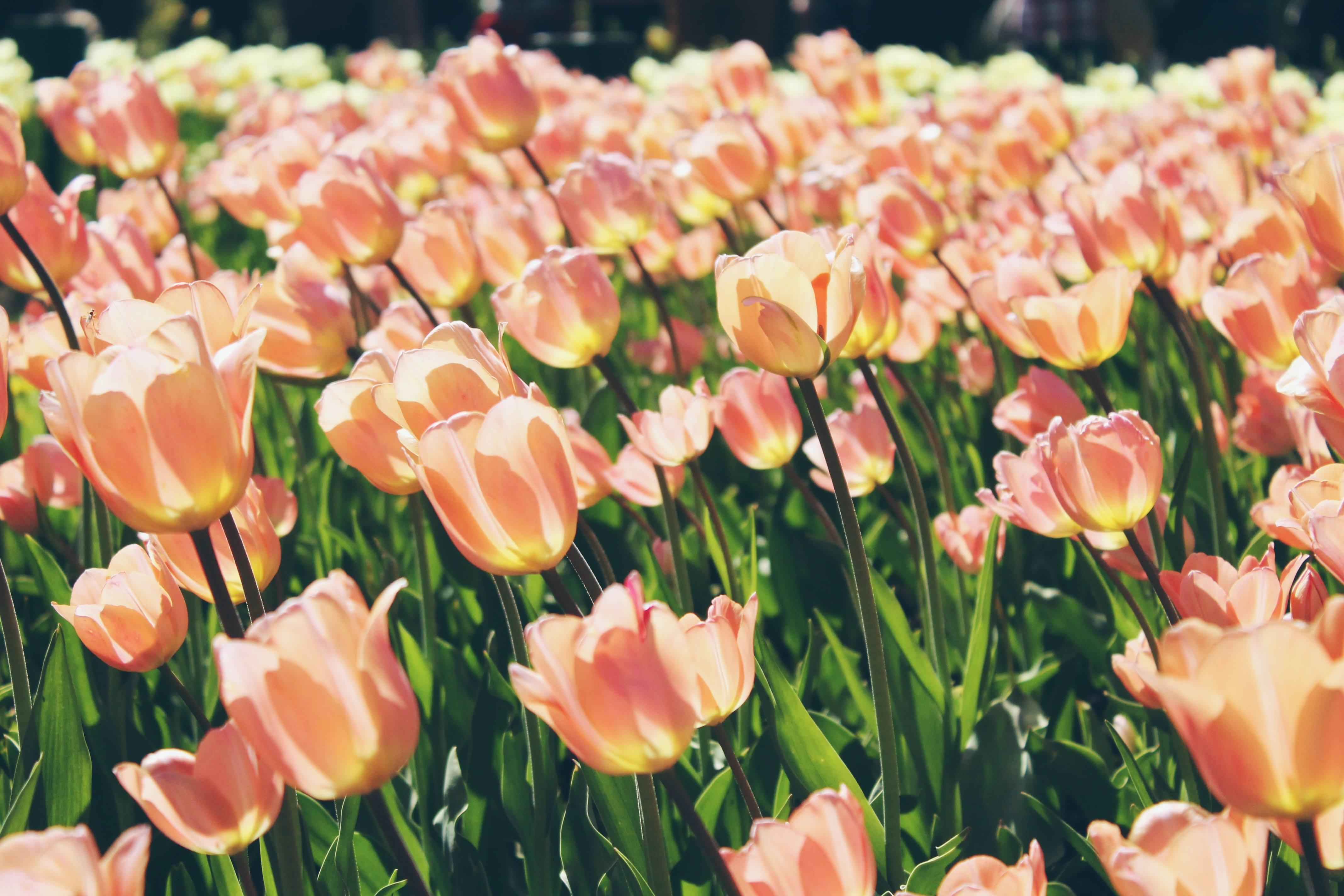 Mensagens De Bom Dia Flores: Mensagem De Bom Dia Sábado Com Flores! A Elegância Da Vida