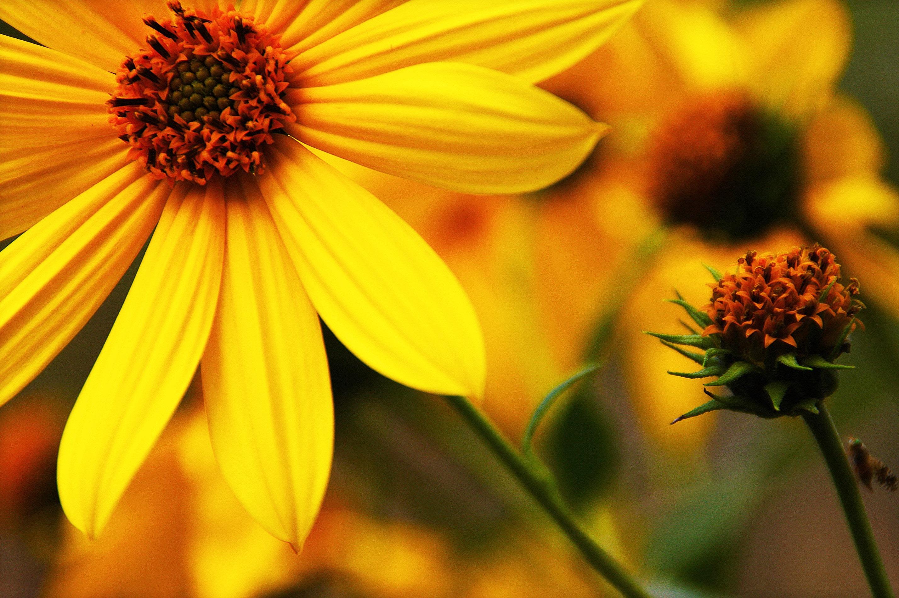 Mensagem De Bom Dia Segunda-feira Com Flores! Tenha Uma