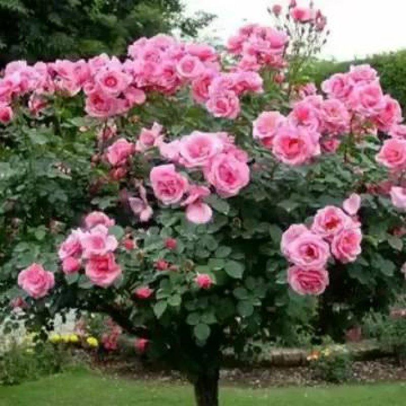 Vídeo De Bom Dia Com As Mais Lindas Flores Para Embelezar Seu Dia