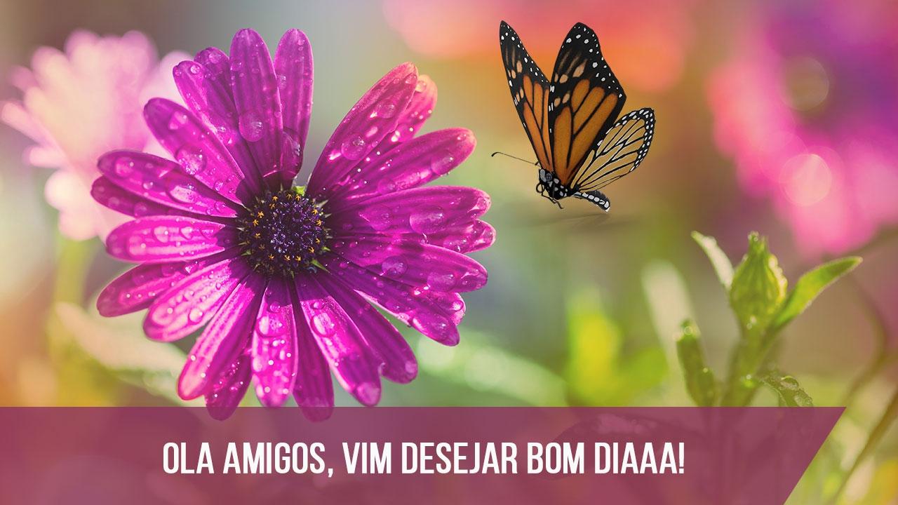 Uma Flor De Bom Dia: Melhor Sempre Borboletas Lindas Para Facebook Com Frases