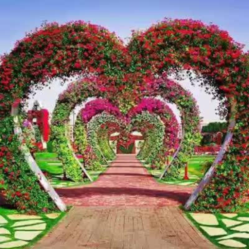 Vídeo De Bom Dia Com Flores Para Perfumar O Dia De Seus Amigos