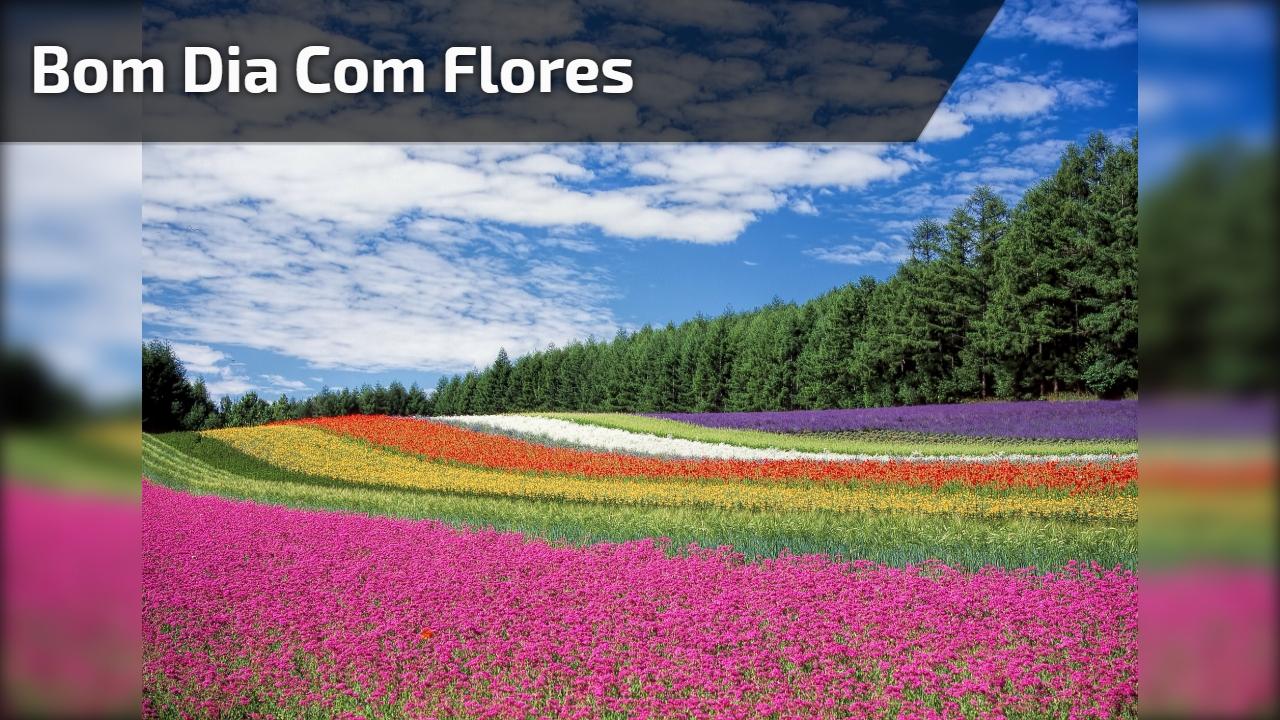 Mensagens Com Flores De Bom Dia: Vídeo De Bom Dia Com Flores Para Perfumar O Dia De Seus