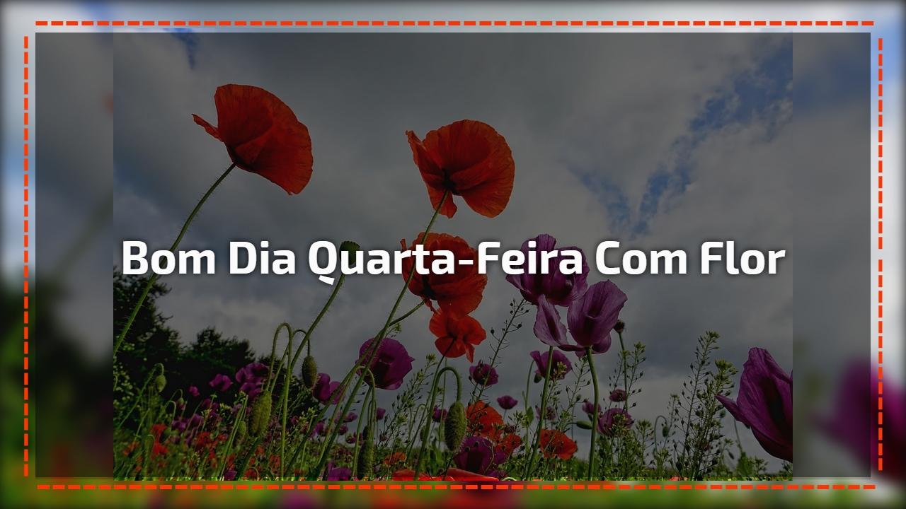 Uma Flor De Bom Dia: Vídeo De Bom Dia Quarta-feira Com Flores Lindas