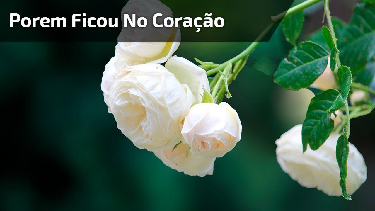 Dia De Finados Mensagem Para Facebook Se Você Perdeu Alguém Querido