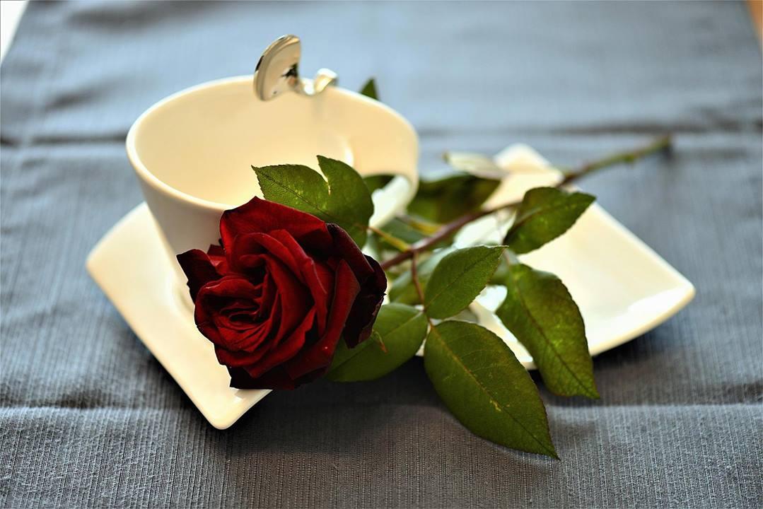 Mensagem De Bom Dia Para O Amor Da Minha Vida, Feliz Dia