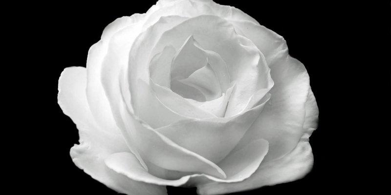 Mensagem de finados para os avós que partiram e deixaram muitas saudades!!!
