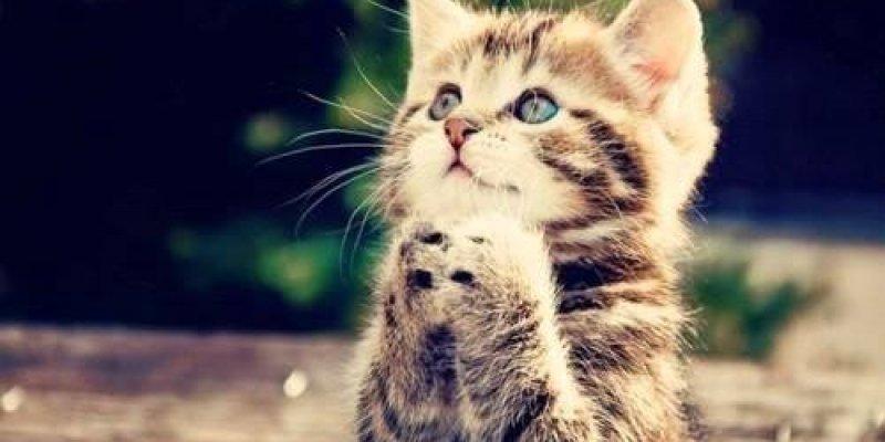 Oração antes de dormir, reze com muita fé e terá uma noite de sono tranquila!