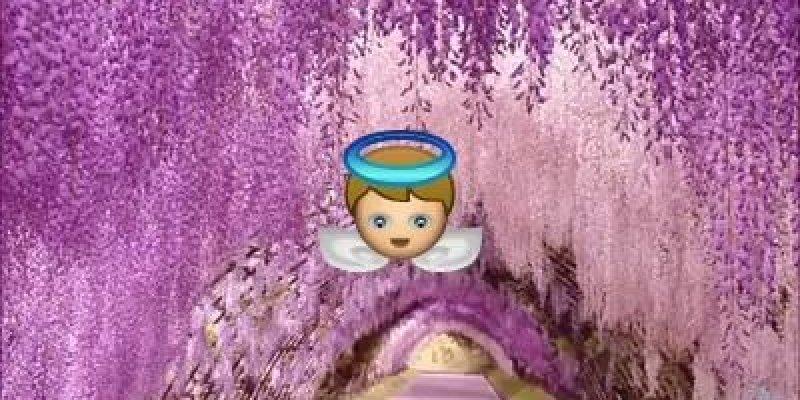 Excepcional Oração da Felicidade Papa Francisco, veja com coração aberto!!! DB31